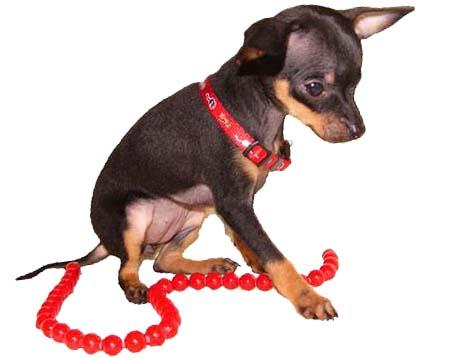почему у собаки пахнет из пасти