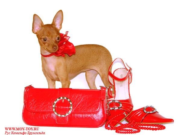 Одежда для собак Clothes.  Ссылки Links.  Щенки той терьера Puppies sale.