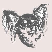 Petit chien russe (Russkiy toy) poil long