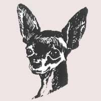 Petit chien russe (Russkiy toy) poil lisse