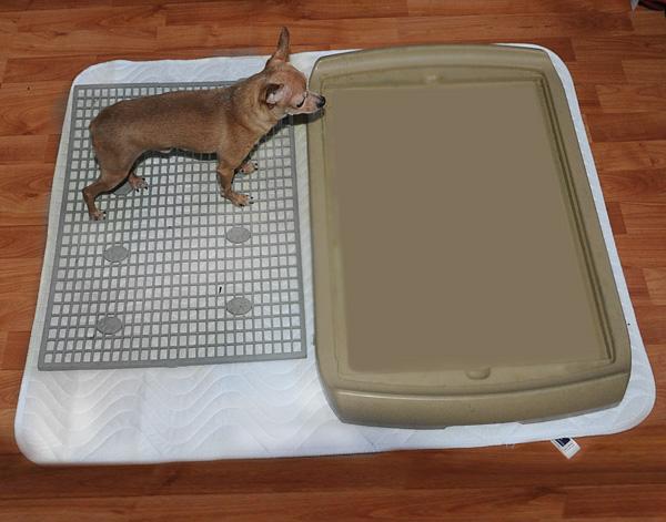 Многоразовая впитывающая пеленка для собачьего туалета, фото